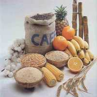 Agro Products & Commodities E-Commerce Business