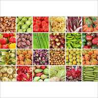 Dried Vegetables E-Commerce Business